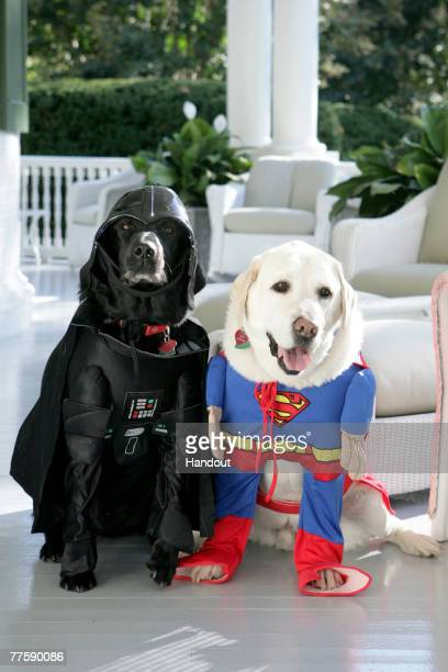 In this handout photo provided by The White HouseVice President Dick Cheney's Labrador retrievers Jackson and Dave sit for photos at the Vice...