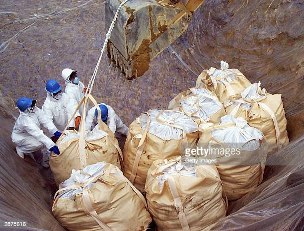 In this handout picture from the Yamaguchi Prefectural Government workers are seen placing sacks, full of slaughtered chickens, into a hole ready for...