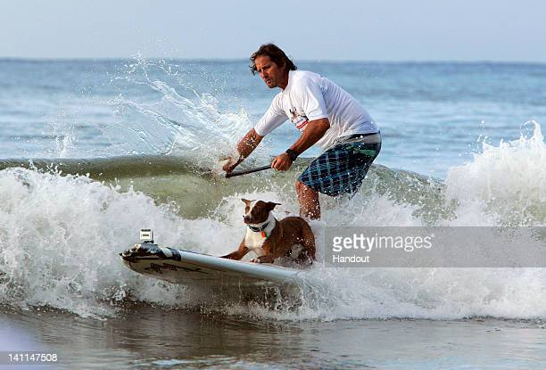 In this handout provided by Friends Furever Chris De Aboitiz rides a wave with his surf dog during the Surfing Dog Spectacular on March 12 2012 at...