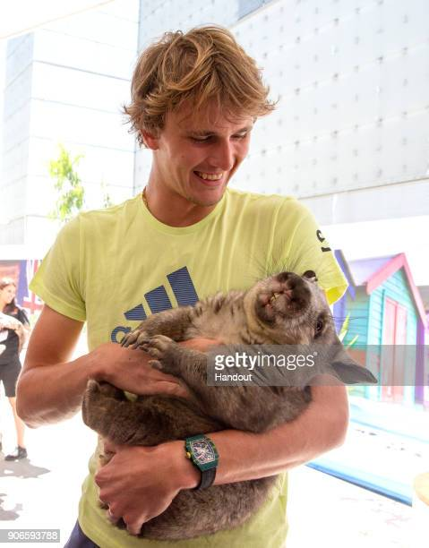 In this handout provided by Tennis Australia Alexander Zverev of Germany holds a Wombat during day three of the 2018 Australian Open at Melbourne...