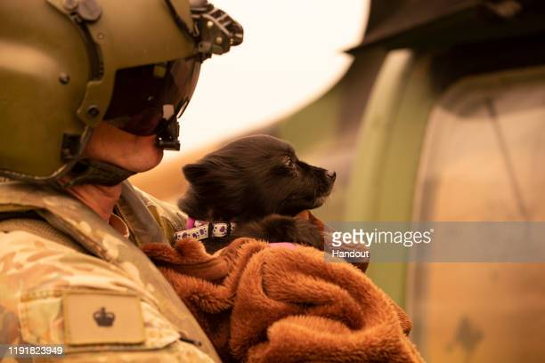 In this handout provided by the Australian Department of Defence an Australian Army soldier carries an evacuee's dog onto an Australian Army CH47F...