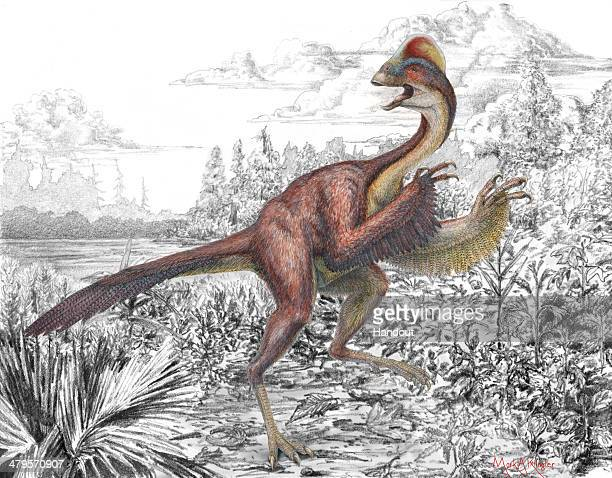 UNDATED In this handout provided by the Carnegie Museum of Natural History an artist's redering depicts a previously unknown birdlike dinosaur that...