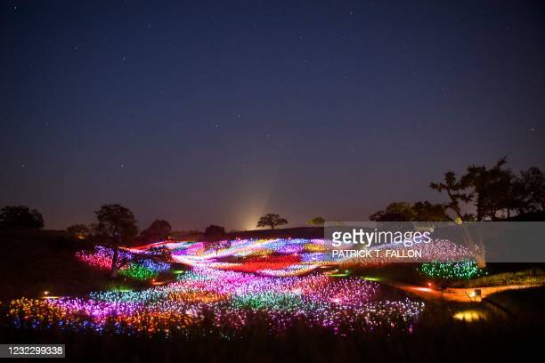 In this long exposure image, fiber-optic lights glow at the Field of Light immersive art installation from artist Bruce Munro, part of the Light at...