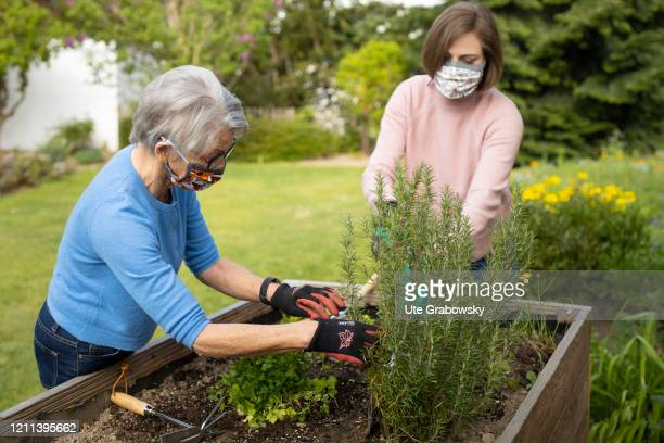 In this photo illustration a grandmother and a granddaughter gardening They wear masks to protect each other from the Corona pandemic on April 28...