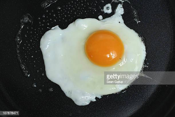 In this photo illustration an egg bought in a supermarket fries in a frying pan on January 5 2011 in Berlin Germany German authorities across the...