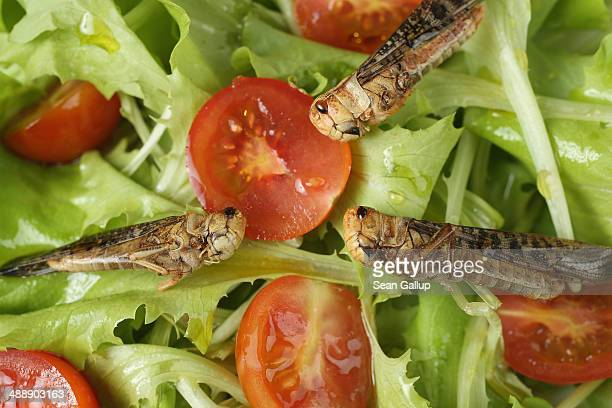 In this photo illustration dried grasshoppers seasoned with chili and bought at a store selling insects for human consumption lie presented in a...