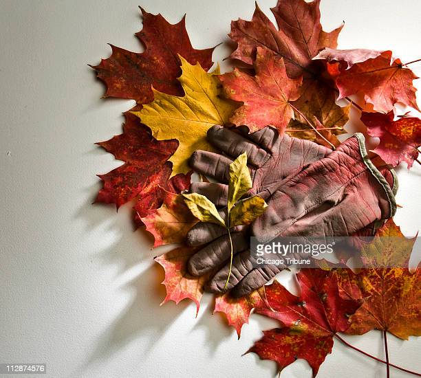 In this photo illustration fall leaves and gardening gloves depict fall garden cleanup