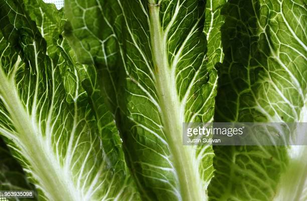 In this photo illustration Romaine lettuce is displayed on May 2 2018 in San Anselmo California One person in California has died from E coli linked...