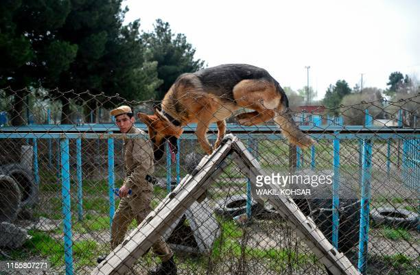 In this photo taken on April 7 an explosive detection dog goes over an obstacle during a practice session at the Mine Detection Centre in Kabul Naya...