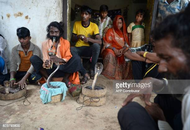 In this photo taken on July 14 an Indian snake charmer plays a flute as family members gather around cobra snakes in Kapari village around 40km...