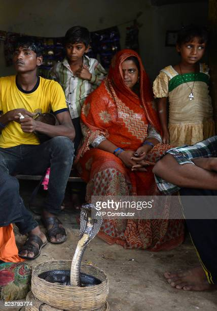 In this photo taken on July 14 the family members of Indian snake charmer gather around a cobra snake in Kapari village around 40km southwest of...
