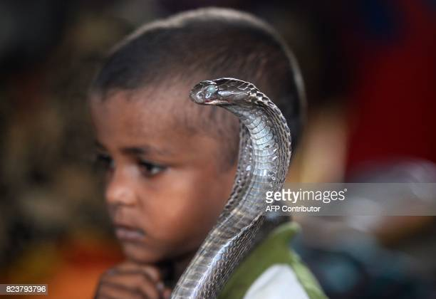 In this photo taken on July 14 the son of an Indian snake charmer holds a cobra snake in Kapari village around 40km southwest of Allahabad in Uttar...