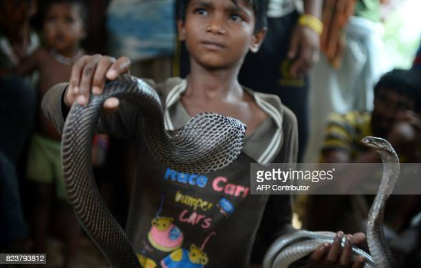 In this photo taken on July 25 the son of an Indian snake charmer holds a cobra snake in Kapari village around 40km southwest of Allahabad in Uttar...