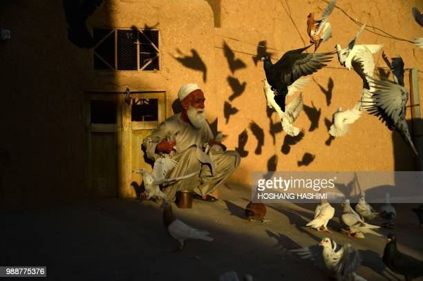 TOPSHOT In this photo taken on June 30 An Afghan pigeon fancier Abdul Ghani sits as he feeds his pigeons flying from the rooftop of his home in Herat...