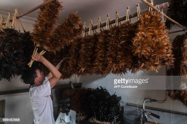In this photo taken on June 6 Nguyen Huy Luan hangs chicken feather dusters to dry after pasting them onto sticks at a house in the outskirts of...