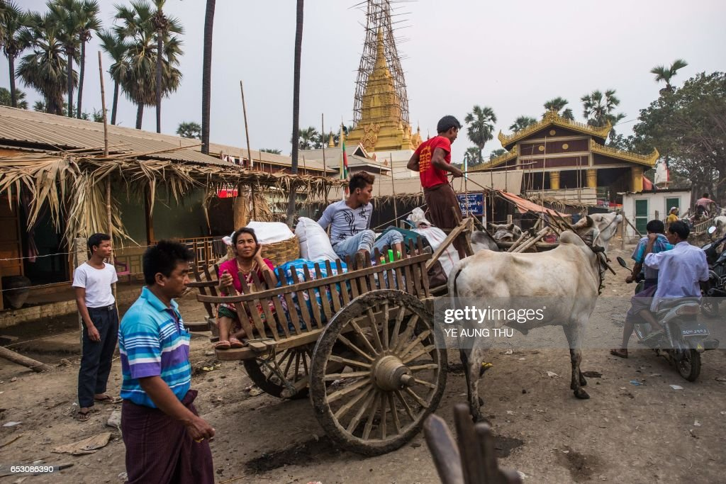 In this photo taken on March 7, 2017, a man drives an ox cart as he and others arrive in Shwe Ku Ni village to participate in the Ko Gyi Kyaw Nat festival. The medium spins around in a frenzy of red and gold while glugging from a bottle of whiskey, part of an age old ritual to honour Myanmar's spirit guardian of drunkards and gamblers. Every year thousands of people pour into a small village southwest of Mandalay for a two-week festival, many packed into boats clutching bags of food and bedding or pulling up on rickety old bullock carts. / AFP PHOTO / Ye Aung THU