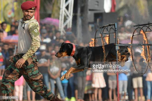 In this photo taken on March 8 a trained dog jumps through a ring of fire during a demonstration by Sri Lankan Commando Regiment soldiers following...