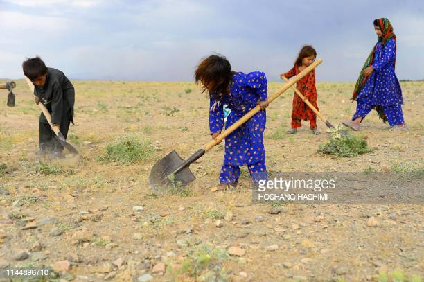 TOPSHOT In this photo taken on May 18 Afghan children collect grass twigs and other vegetation for fire in a field on the outskirt of Herat province