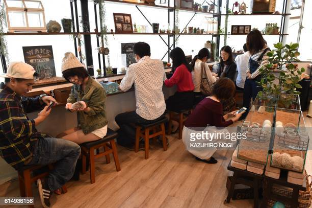 In this photo taken on October 15 customers visit Harry Hedgehog Cafe to play with hedgehogs in Tokyo The new animal cafe which is located in Tokyo's...