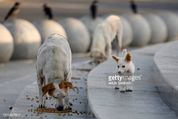 In this photograph taken on April 22 stray dogs feed on food distributed by Blue Cross India workers during a governmentimposed nationwide lockdown...