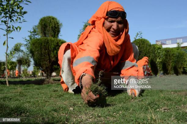 In this photograph taken on April 23 a female Afghan municipality employee, supported by United Nations agency UN-Habitat, removes weeds at a garden...