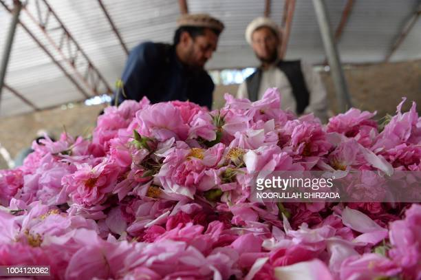 In this photograph taken on April 24 Afghan men fill a sack with rose petals in the DaraiNoor district of Nangarhar province Standing in a field of...