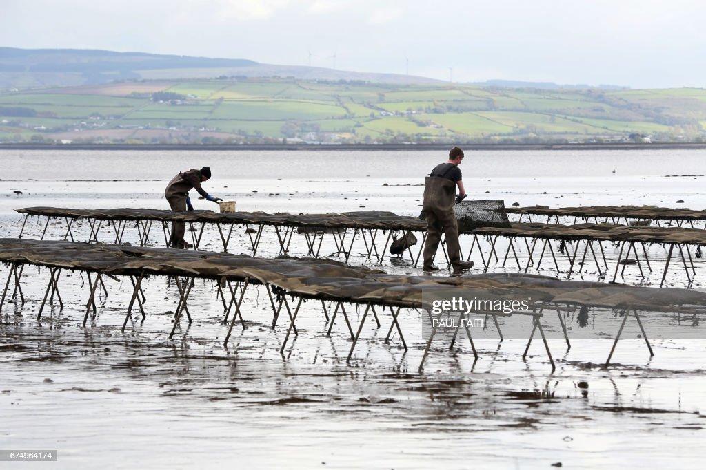 BRITAIN-EU-POLITICS-BREXIT-IRELAND-FISHING : News Photo
