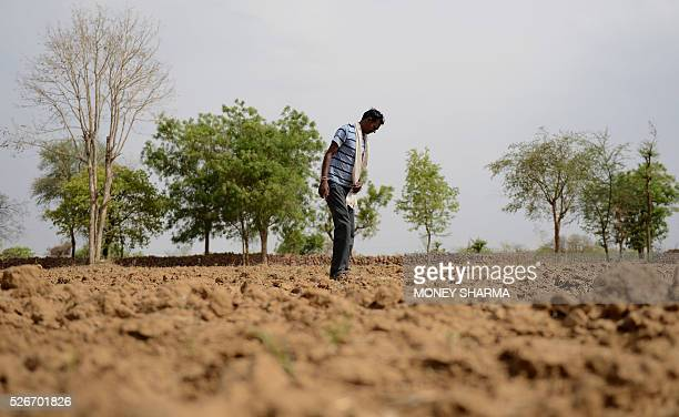 In this photograph taken on April 27 Indian farmer Gassiram Meharwal stands in his field in the village of Bangaye on the outskirts of Tikamgarh...