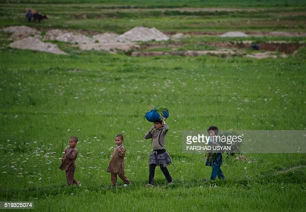 In this photograph taken on April 5 Afghan children carry grass cuttings through a field on the outskirts of MazariSharif / AFP / FARSHAD USYAN