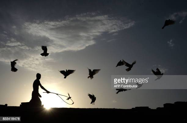 In this photograph taken on August 16 an Afghan man uses a stick to corral his flock of domesticated pigeons atop the roof of his house on the...