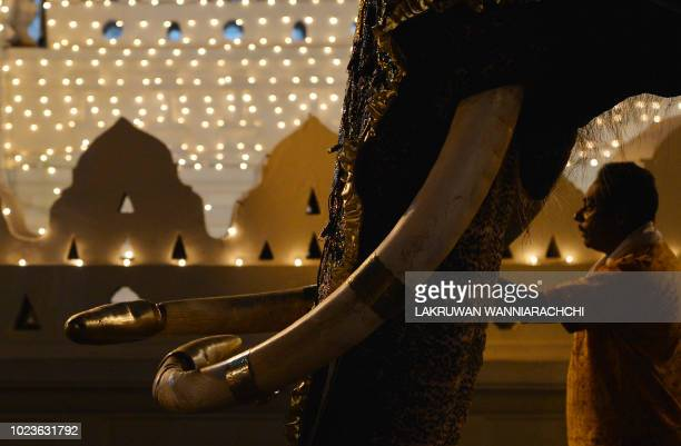 """In this photograph taken on August 25 an elephant decorated for the """"Esala Perahera"""" festival is lead past the Sri Lankan Buddhist temple of the..."""