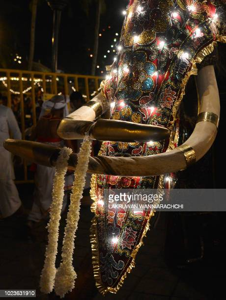 """In this photograph taken on August 25 an elephant decorated for the """"Esala Perahera"""" festival is lead past Sri Lankan Buddhist the temple of the..."""