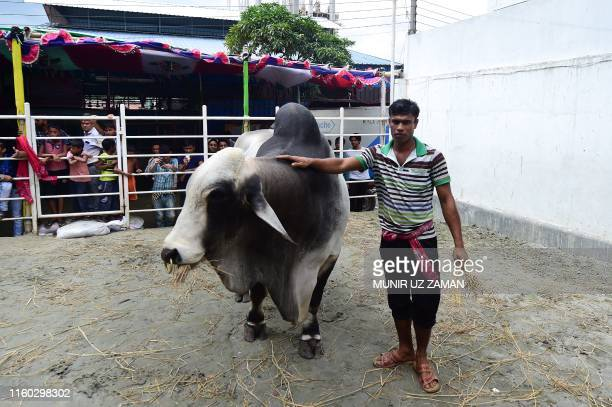 In this photograph taken on August 7 onlookers gather as a worker of the Sadeeq Agro farm walks with Boss the ox which was sold for a record price of...
