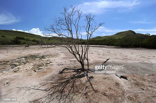 In this photograph taken on December 3 dry land scape of Rinca island home of the Komodo dragon is surrounded by hills with green vegetation in the...