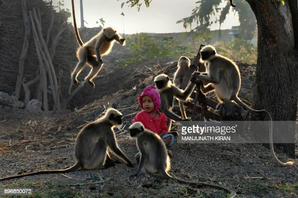 In this photograph taken on December 8 Indian child Samarth Bangari sits among langur monkeys in a field near his home in Allapur in India's...