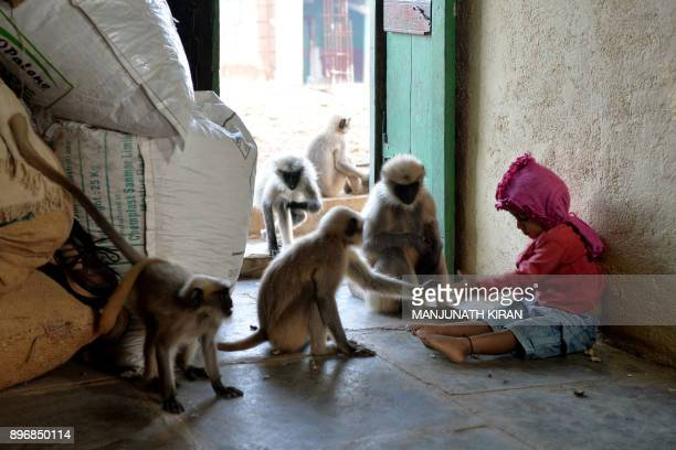 In this photograph taken on December 8 Indian child Samarth Bangari feeds langur monkeys at his home in Allapur in India's southwest Karnataka state...