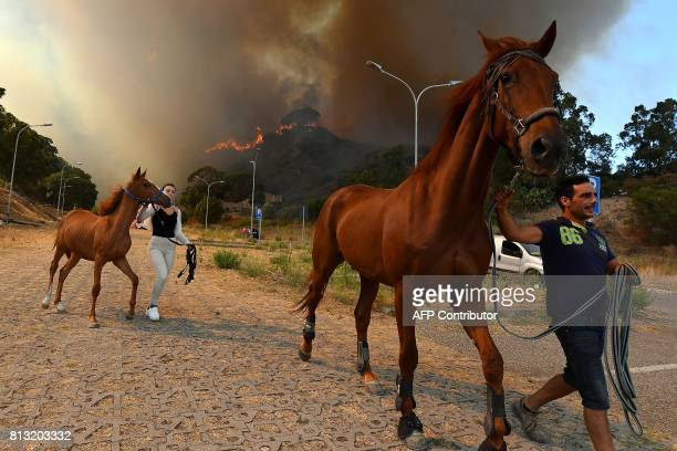 In this photograph taken on July 10 horses are evacuated in the Annunziata district of Messina as a fire rages Across the country Italian...