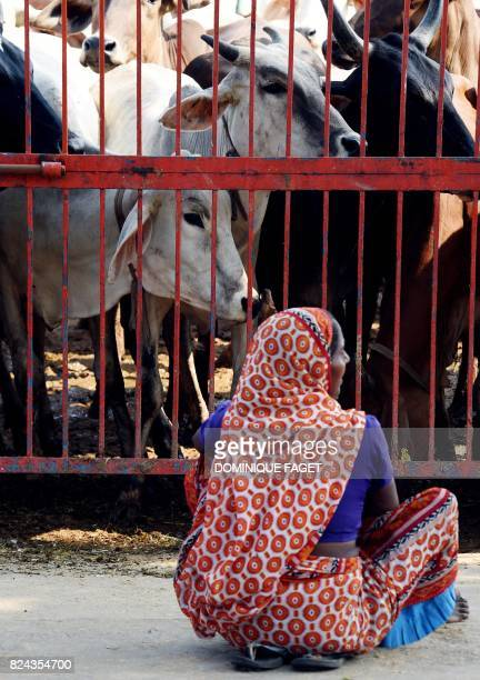 In this photograph taken on July 19 an Indian woman looks at cows at the 'Sri Krishna Gaushala' in Bawana a suburb of the Indian capital New Delhi...