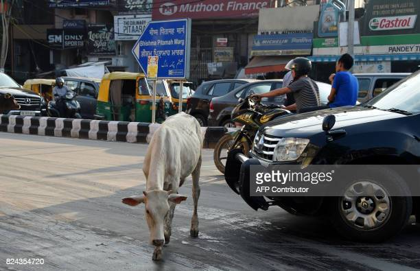 In this photograph taken on July 20 2017 a cow walks past traffic in New Delhi Revered by most Indians cows are at the centre of political battles...