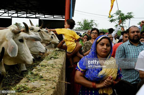 In this photograph taken on July 23 2017 Indian devotees visit cows at the 'Sri Krishna' cow shelter in Bawana a suburb of the Indian capital New...