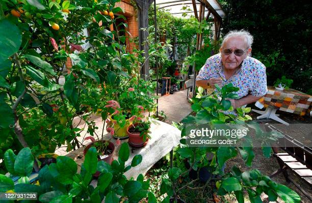 In this photograph taken on July 29 geneticist and 'aroma sculpturer' Michael Moisseeff examines a plant in the garden of his home at...