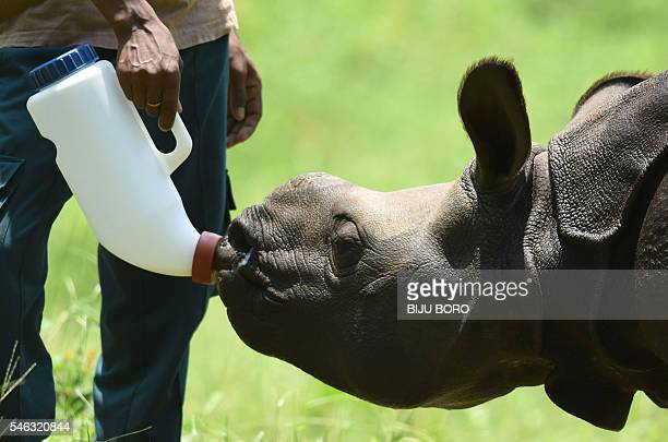 In this photograph taken on June 2 a rescued male rhino calf is fed a bottle of milk by an Indian animalkeeper at The Centre for Wildlife...