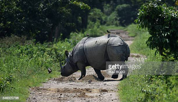 In this photograph taken on June 2 an Indian one-horned rhino crosses a path in Kaziranga National Park, some 250kms east of Guwahati. As night falls...