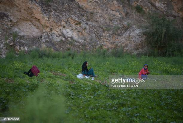 In this photograph taken on June 23 Afghan girls work at a farm on the outskirts of Mazarisharif