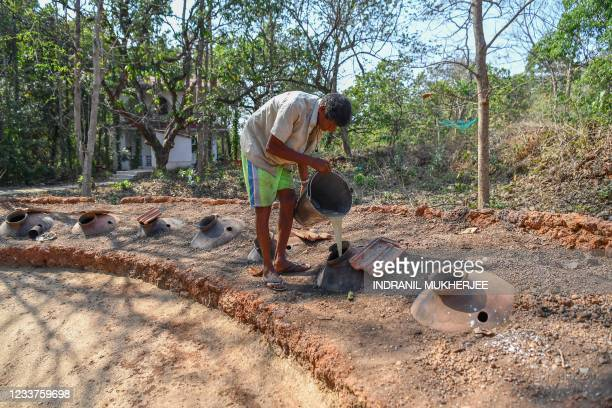 In this photograph taken on March 13 distiller Anton Moir pours cashew apple juice into earthen pots for fermentation at the Cazulo farm in...