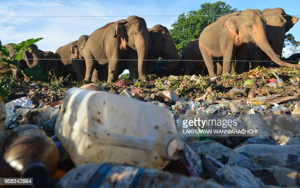 In this photograph taken on May 11 wild elephants near an electric fence rummages through garbage dumped at an open ground in the village of...
