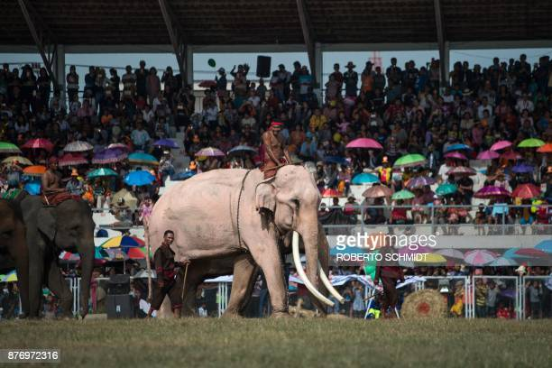 In this photograph taken on November 18 a white elephant walks across a football pitch in a stadium during an elephant show in the town of Surin in...