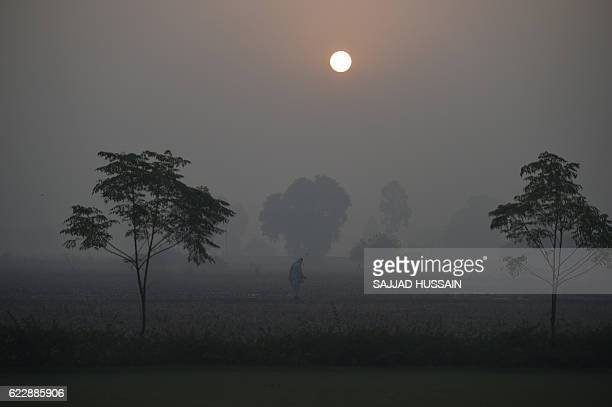In this photograph taken on November 8 an Indian farmer walks through the fields in the early morning haze at Karnal some 140kms north of New Delhi...