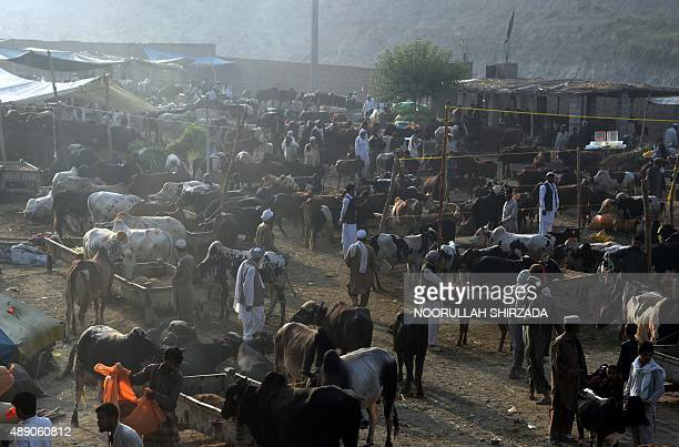 In this photograph taken on September 18 Afghan traders gather at a livestock market ahead of the sacrificial Eid alAdha festival on the outskirts of...