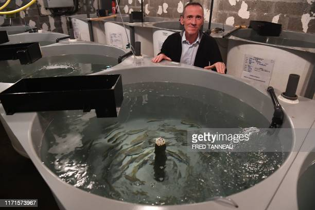 In this photograph taken on September 20 French researcher in animal physiology David Mazurais poses in front of ponds containing sea bass at...